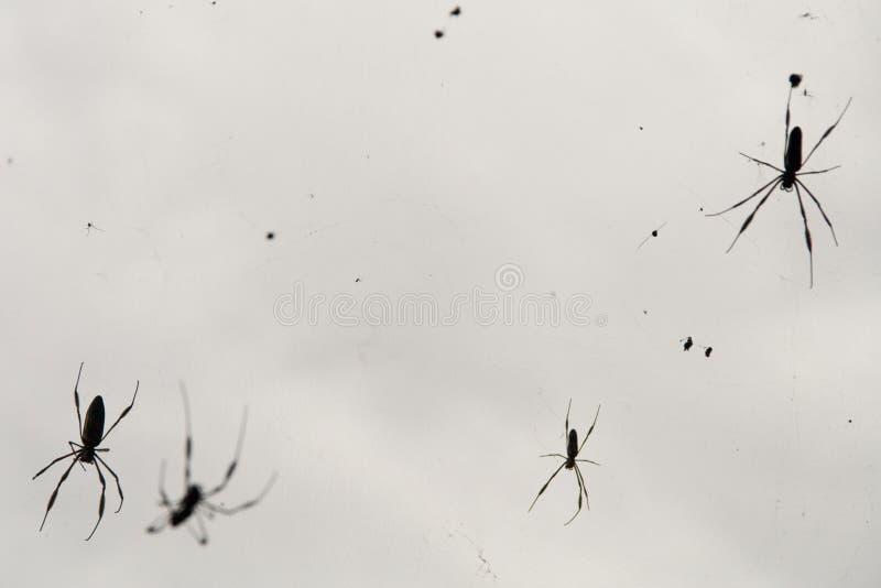 araignée de zone photographie stock libre de droits