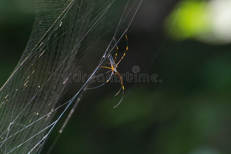 Araignée en bois géante sur le Web photos stock