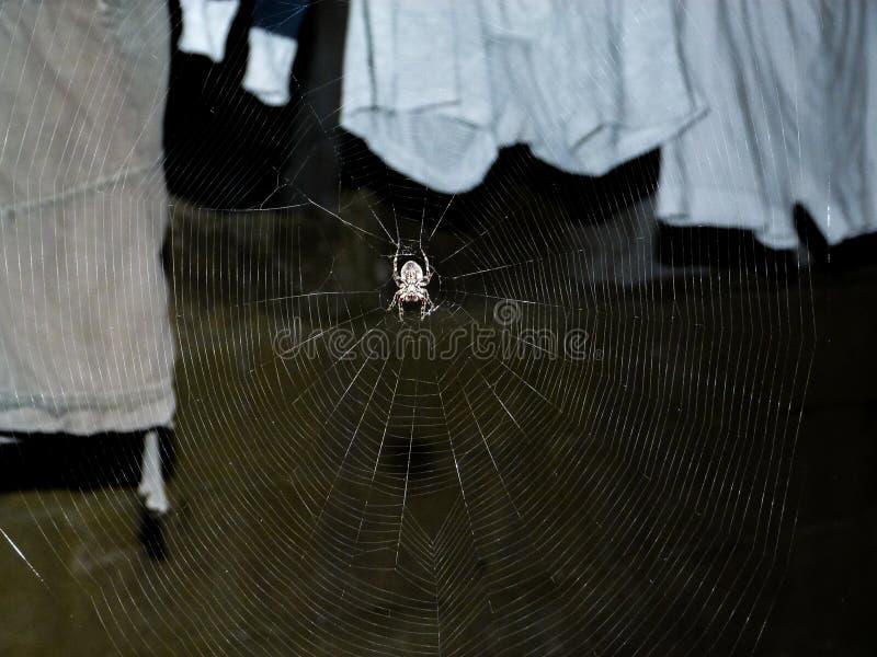 Araignée et Web, scène de nuit photo stock