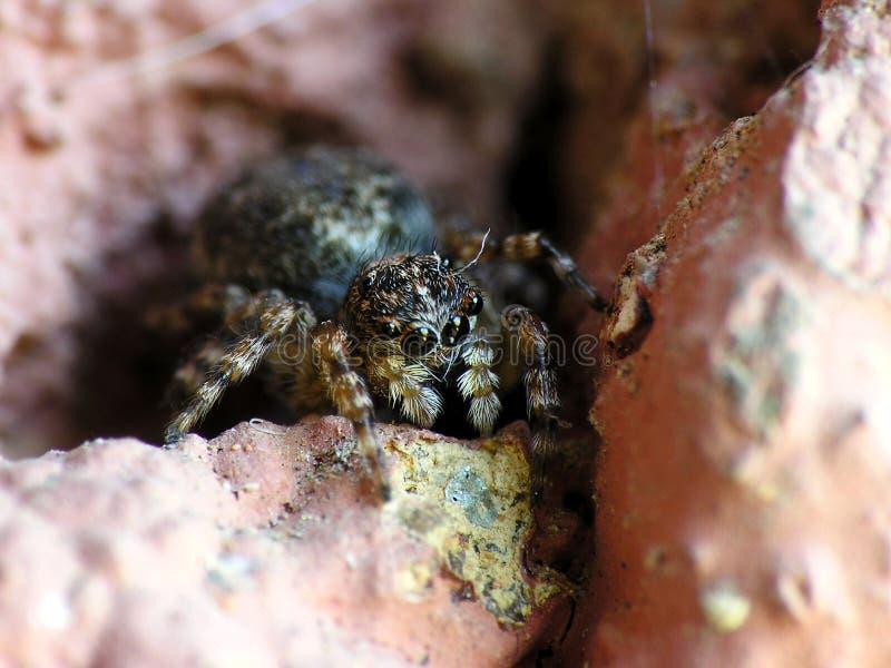 Araignée minuscule photos libres de droits