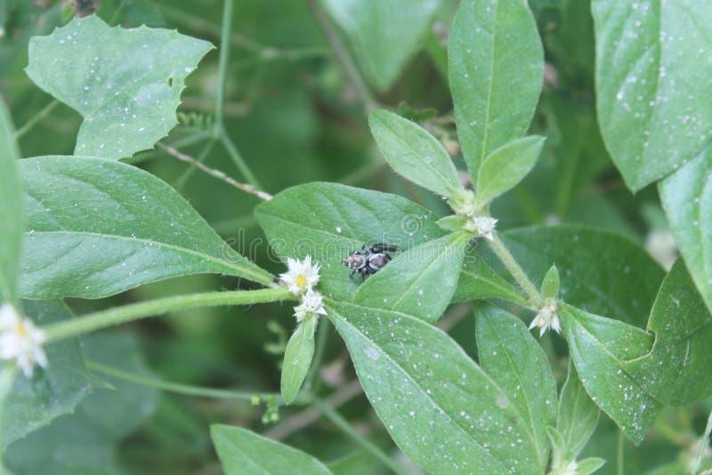 Araignée minuscule photographie stock