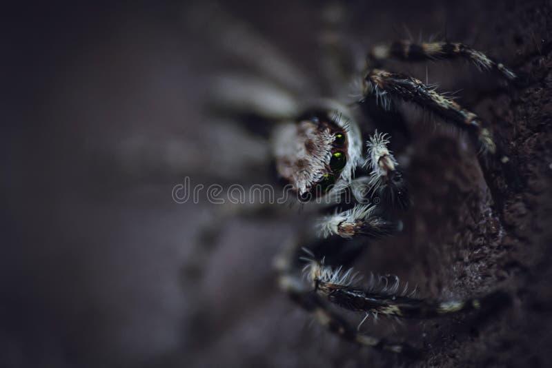 Araignée Noire Et Blanche Domaine Public Gratuitement Cc0 Image