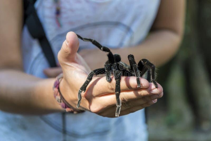 Araignée noire se reposant sur une main de femme images libres de droits