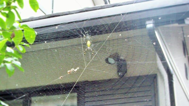 Araignée rayée jaune photo libre de droits