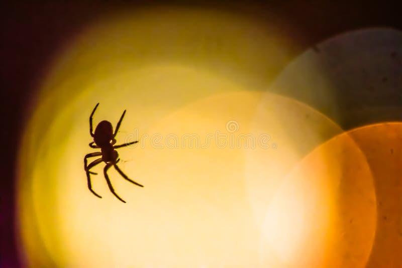 Araignée silhouettée contre un bokeh des lumières image libre de droits