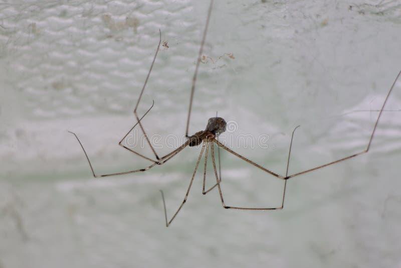 Araignée simple images stock