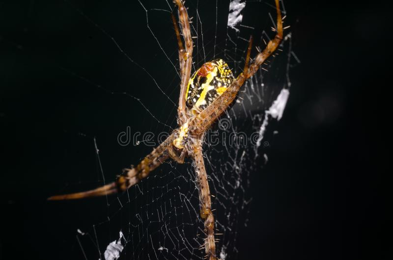 Araignée sur la toile d'araignée images stock