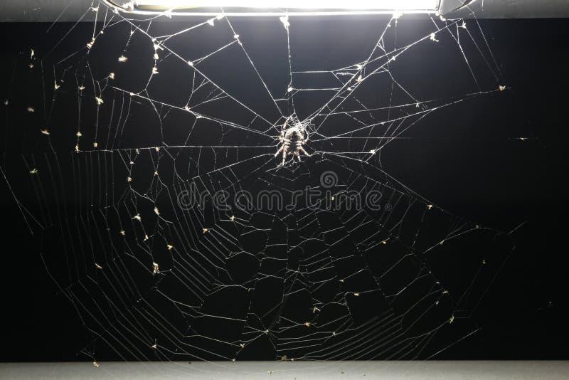 Araignée sur la toile d'araignée sous une lumière photo libre de droits