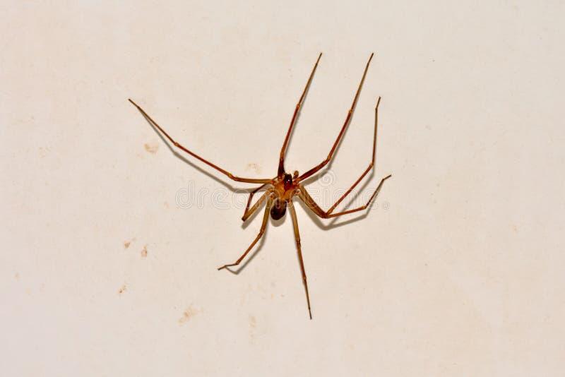 Araignée sur le mur photos stock