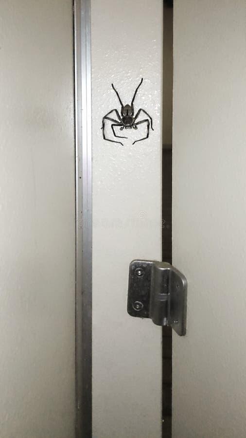 araignée sur le mur près de la porte en bois photo libre de droits