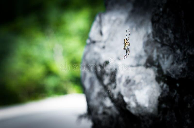 Araignée sur le spiderweb images libres de droits
