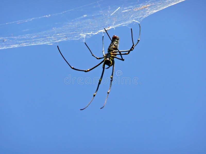 Araignée sur le Web photo stock