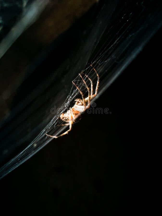 Araignée sur le Web dans l'office photos stock