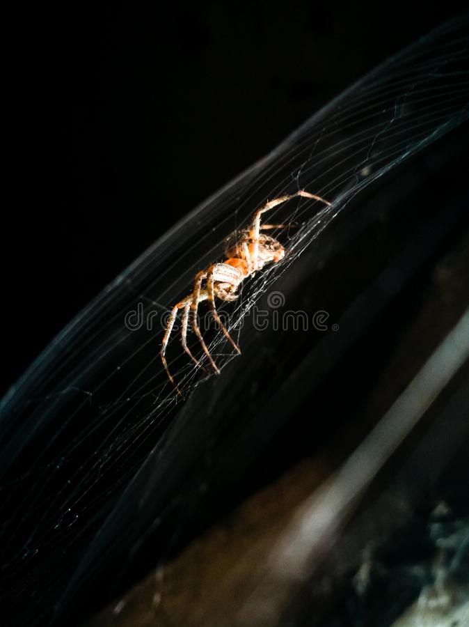 Araignée sur le Web dans l'office photo stock