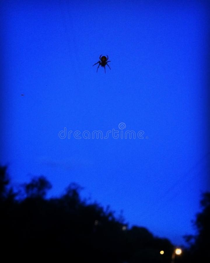 Araignée sur un fond bleu photos stock