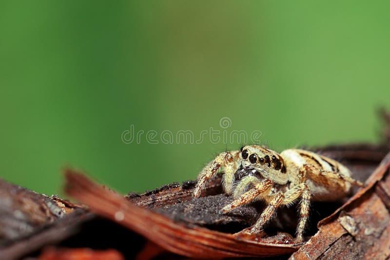 Araignée sur une branche photographie stock