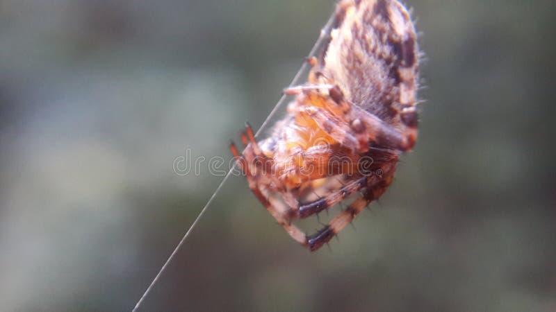 Araignée vivant dans les bois photo stock