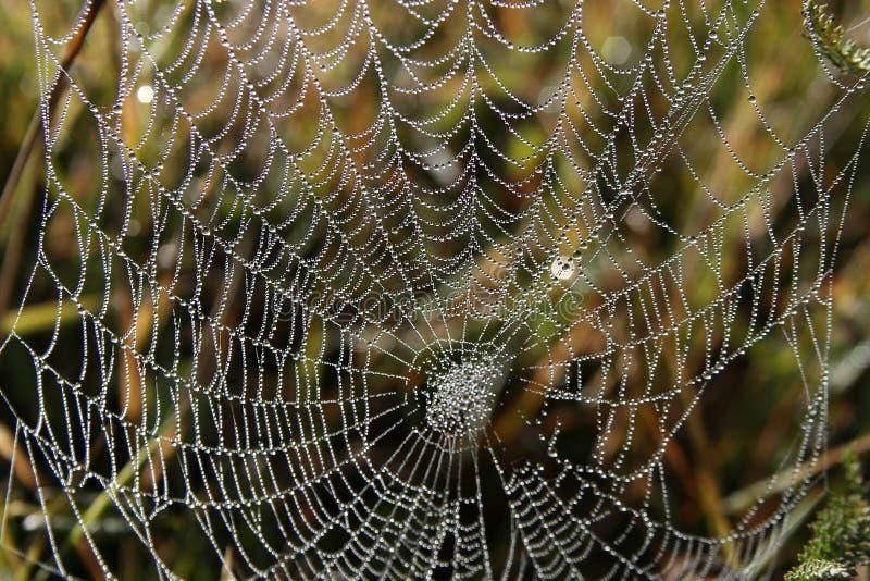 Araignée-Web image stock
