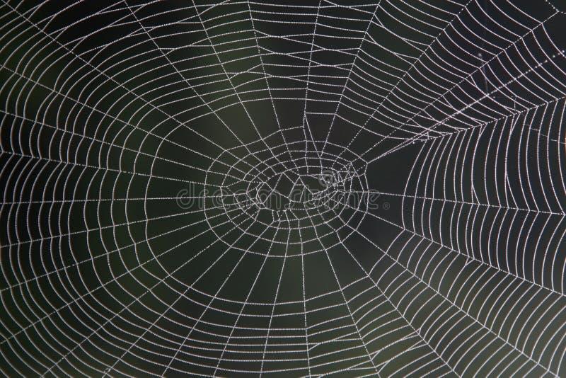 Araignée-Web photographie stock