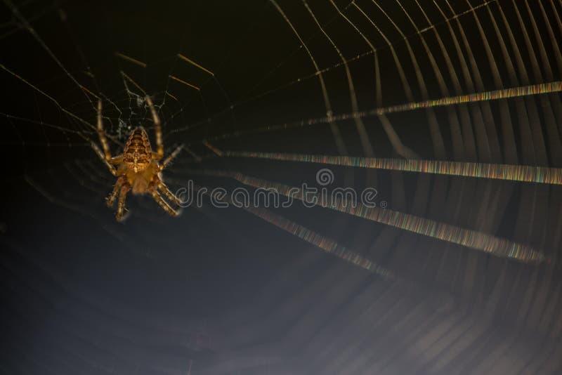 Araignée + Web de Halloween image libre de droits