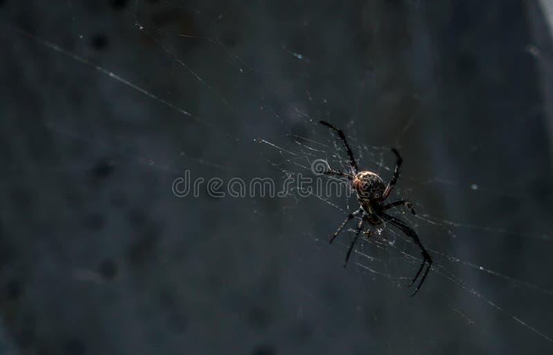 Araignées étonnantes autour de Salt Lake photo stock