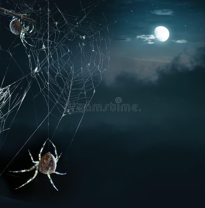 Araignées de réception dans la nuit de Veille de la toussaint images libres de droits
