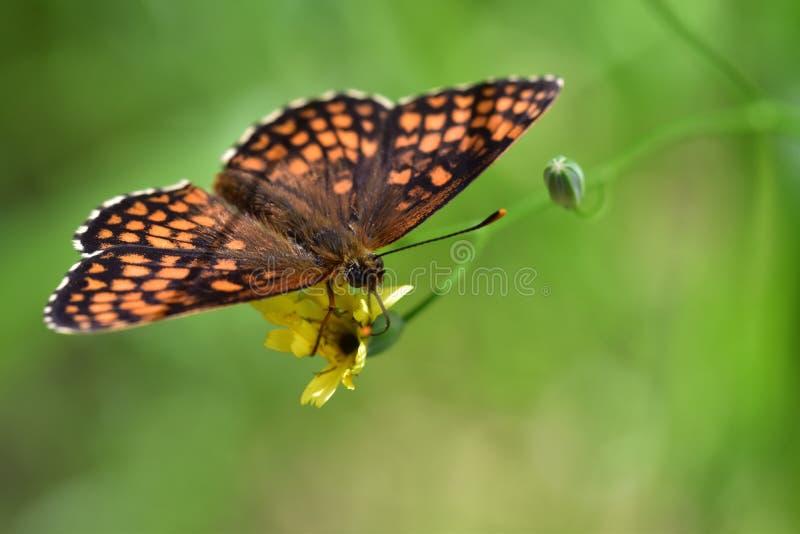 Araignées, insectes e fleurs de la forêt de Moulière ( Le Grande Bignolas) foto de stock royalty free