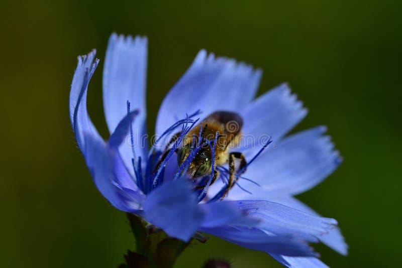 Araignées, insectes e fleurs de la forêt de Moulière ( Les Chirons Noirs) fotografia de stock