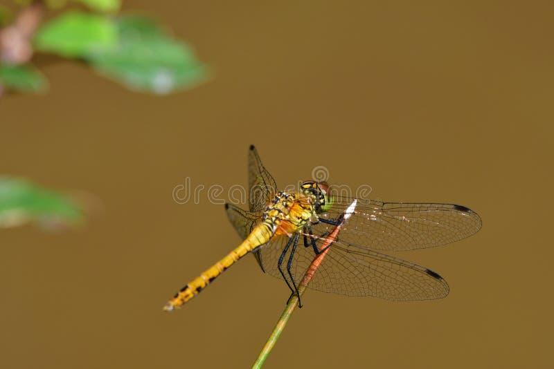Araignées, insectes et fleurs DE La forêt DE Moulière ( Croix Généraux - Heilige Rom) stock foto