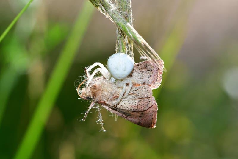 Araignées, insectes et fleurs de la forêt de Moulière ( ; Fermetures de Les - Le Marchais Canes) aux. ; images libres de droits