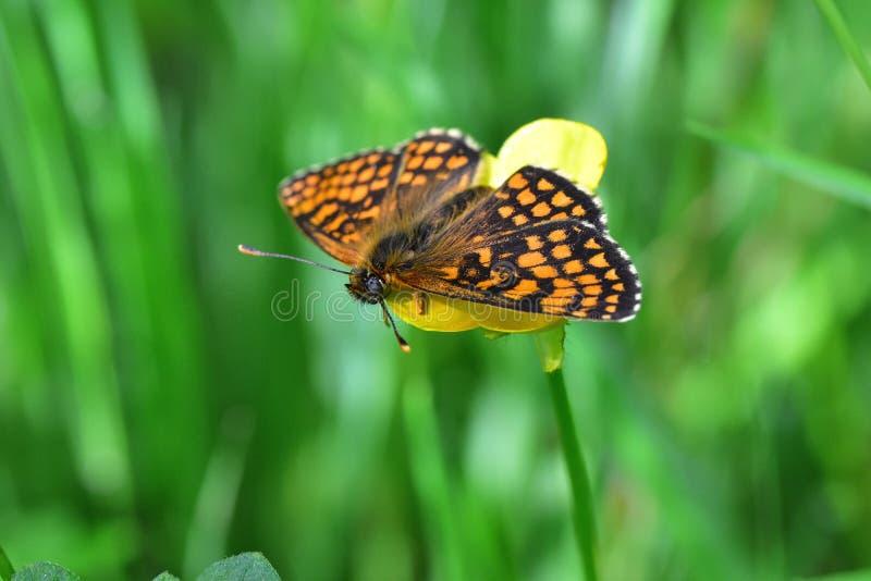 Araignées, insectes et fleurs de la forêt de Moulière ( ; Le Gâchet de Villiers - DES Trembles) de Vallée de La ; images stock