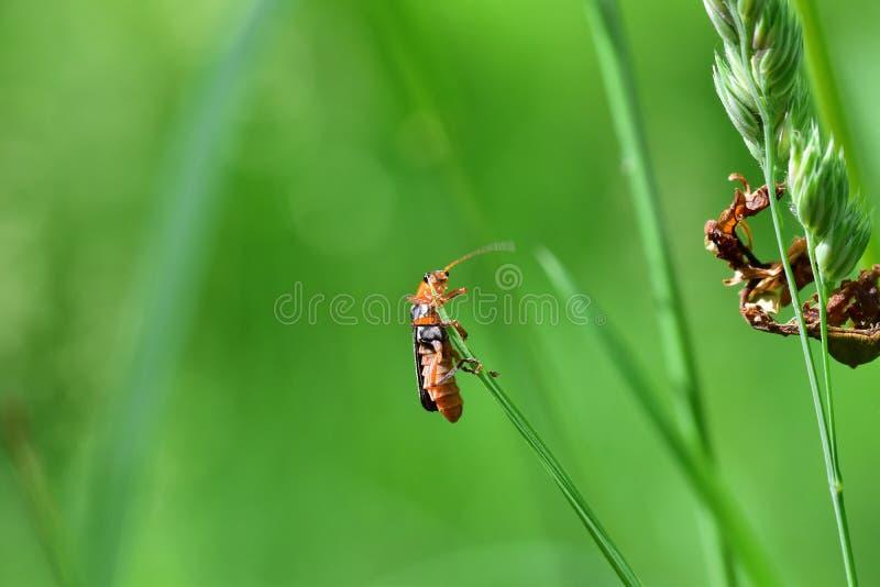 Araignées, insectes et fleurs de la forêt de Moulière ( ; Le Gâchet de Villiers - DES Trembles) de Vallée de La ; image libre de droits