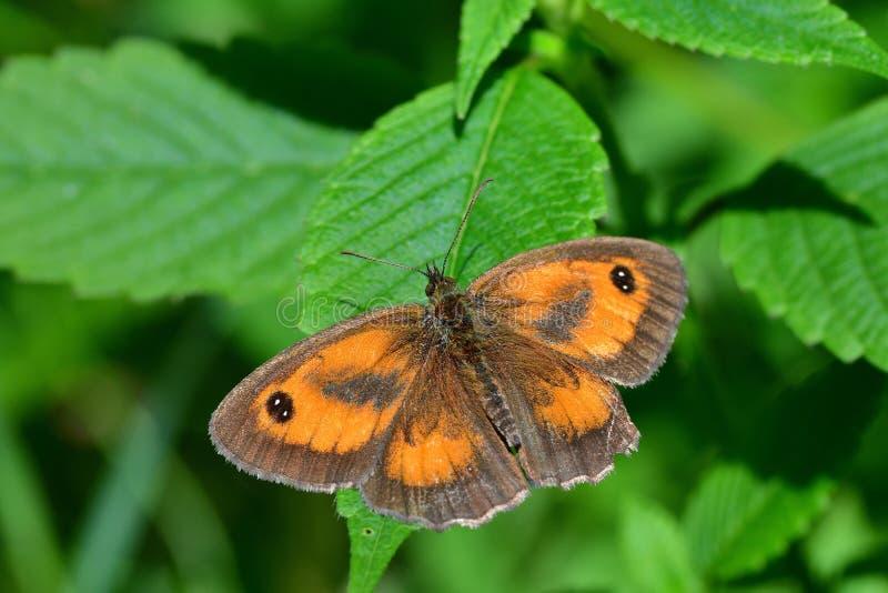 Araignées, insectes et fleurs de la forêt de Moulière ( ; Le Gâchet de Villiers - DES Trembles) de Vallée de La ; photos libres de droits