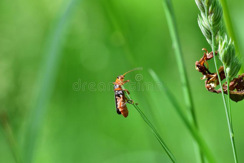 Araignées, insectes et fleurs DE La forêt DE Moulière ( Le Gâchet DE Villiers - La Vallée des Trembles) royalty-vrije stock afbeelding