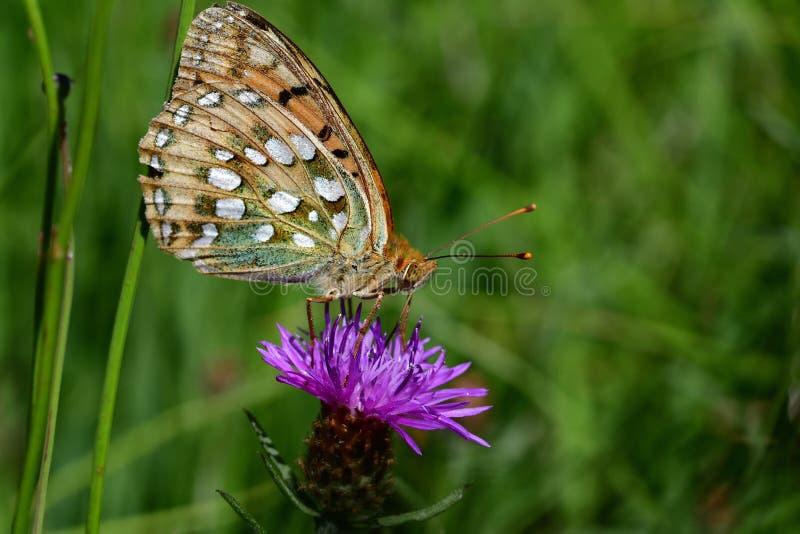 Araignées, insectes et fleurs DE La forêt DE Moulière ( Lessluitingen - Le Marchais aux Canes) royalty-vrije stock foto's