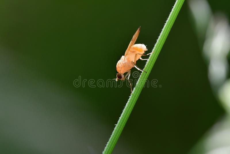 Araignées, insectes et fleurs de la forêt de Moulière (Le Gâchet de Villiers - La Vallée des Trembles) stock image