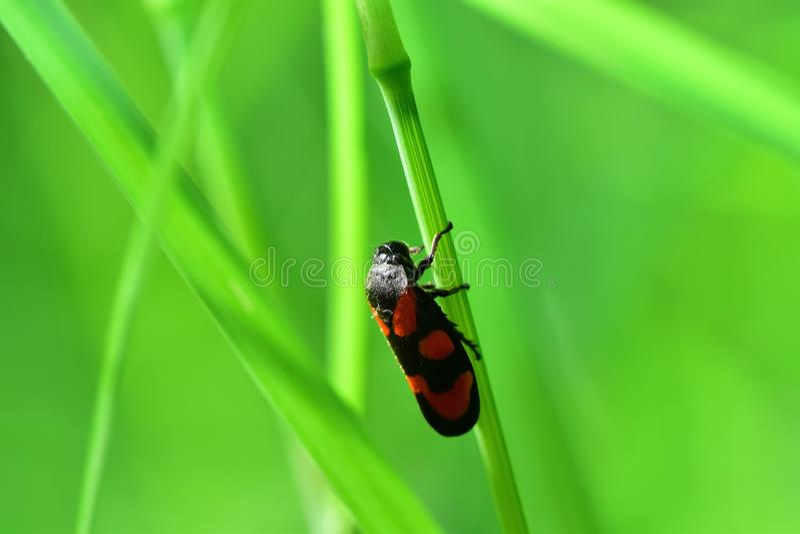 Araignées, insectes und Fleurs de la Forêt de Moulière ( Le Gâchet de Villiers - La Vallée DES Trembles) lizenzfreie stockbilder