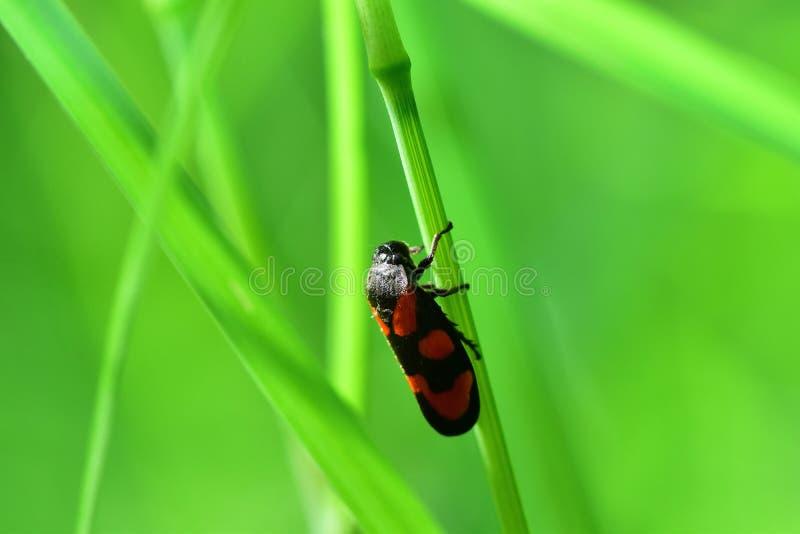 Araignées, insectes y fleurs de la forêt de Moulière ( Le Gâchet de Villiers - DES Trembles) de Vallée del La; imágenes de archivo libres de regalías