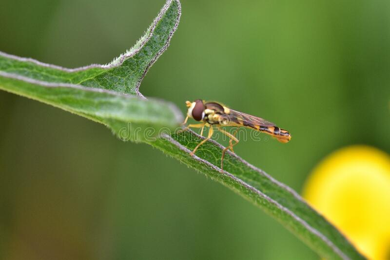 Araignées, insectes y fleurs de la forêt de Moulière ( Le Plan des Aises) fotografía de archivo libre de regalías