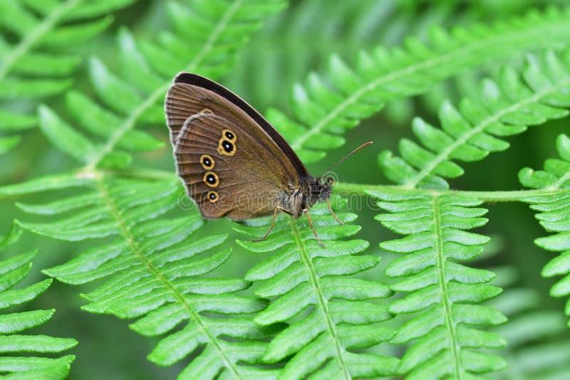 Araignées, insectes y fleurs de la forêt de Moulière ( Les Agobis) fotos de archivo libres de regalías
