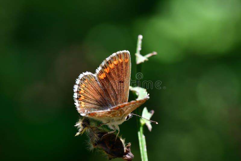 Araignées, insectes y fleurs de la forêt de Moulière ( Les Agobis) foto de archivo