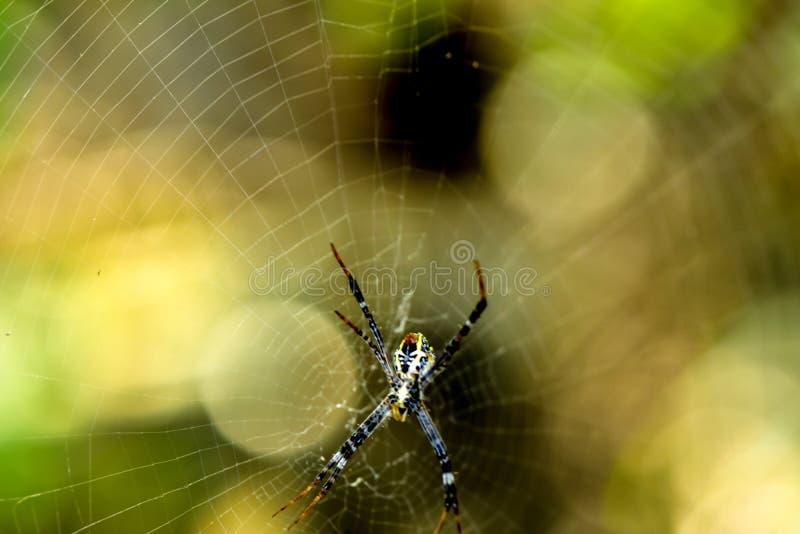 araign?e photographie stock
