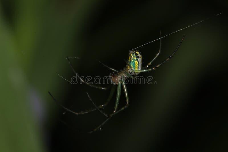 Araign?e de jardin sur le Web photographie stock libre de droits