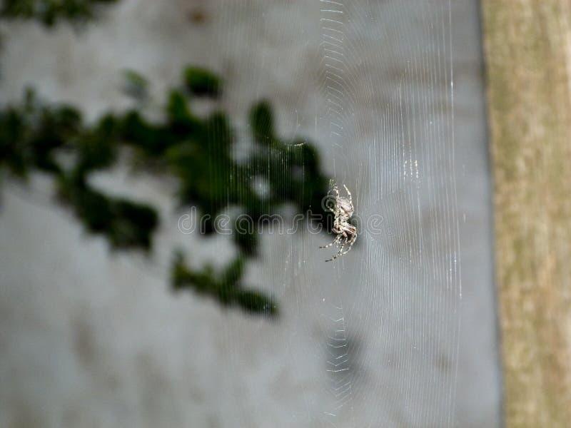 Araign?e et Web, sc?ne de nuit photos stock