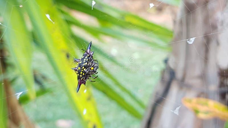 araign?e images stock