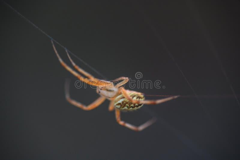 Araign?e sur le Web Le Web d'une araign?e contre le lever de soleil dans le domaine couvert embrume photographie stock libre de droits
