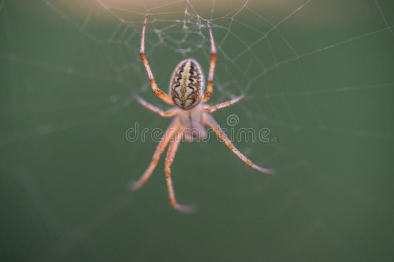 Araign?e sur le Web Le Web d'une araign?e contre le lever de soleil dans le domaine couvert embrume images libres de droits