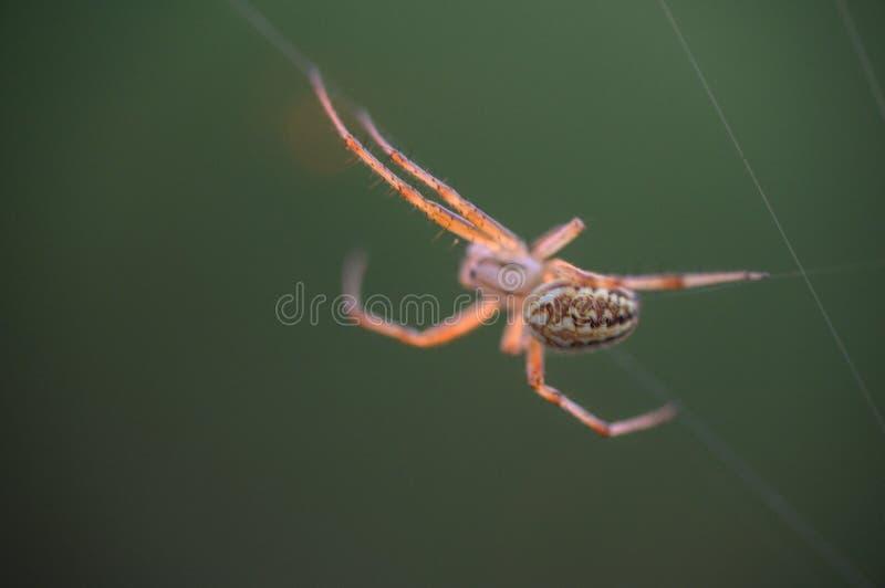 Araign?e sur le Web Le Web d'une araign?e contre le lever de soleil dans le domaine couvert embrume photographie stock