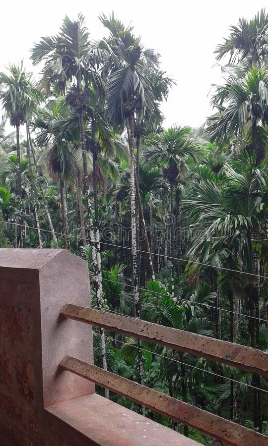 Arakanut种植园 库存图片