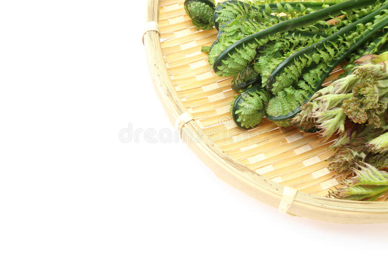 Aralia Sprout and Ostrich fern on a bamboo colander. Pictured Aralia Sprout and Ostrich fern on a bamboo colander royalty free stock image